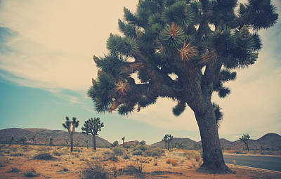 Joshua Tree Photograph - Still Waiting For You by Laurie Search