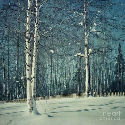 Snowbound Photograph - Still Winter by Priska Wettstein