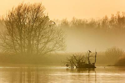 Cormorant Photograph - Stodmarsh by Ian Hufton