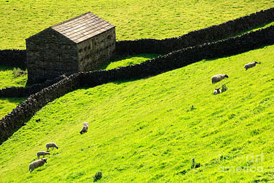 Stone Barn Photograph - Stone Barn And Sheep Grazing On A Steep Hillside In Swaledale by Louise Heusinkveld