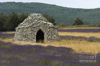 Stone Hut And Lavender, France Print by John Shaw