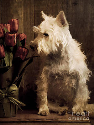 Stop And Smell The Flowers Print by Edward Fielding