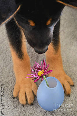 Susan Smith Photograph - Stop And Smell The Flowers by Susan Smith