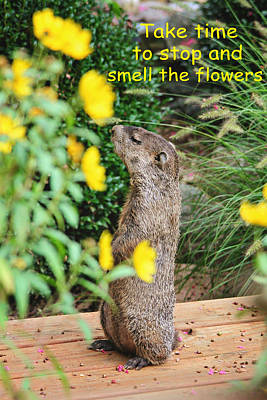 Groundhog Digital Art - Stop And Smell The Flowers by Trina  Ansel