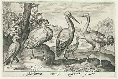 Stork Drawing - Stork, Crane, Heron And Spoonbill, Nicolaes De Bruyn by Nicolaes De Bruyn