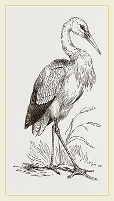 Stork Drawing - Stork by Litz Collection
