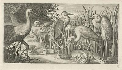 Stork Drawing - Storks And Ducks At A Pond, Jan Van Londerseel by Jan Van Londerseel
