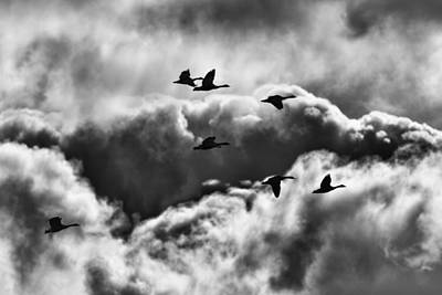 Fox Valley Photograph - Stormy Flight by Thomas Young