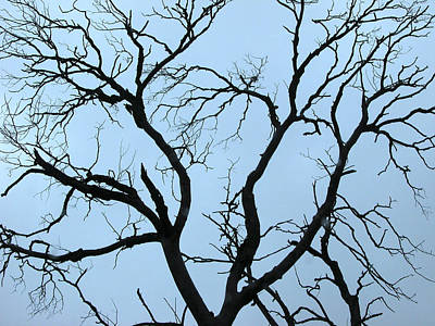 Stormy Trees Print by Guido Montanes Castillo