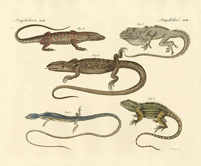 Strange Amphibians Print by Splendid Art Prints