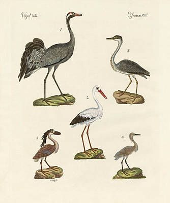 Stork Drawing - Strange Beach Birds by Splendid Art Prints