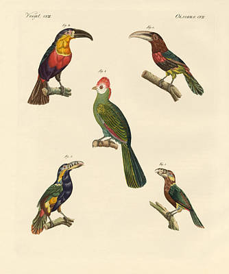 Toucan Drawing - Strange Climbing Birds by Splendid Art Prints