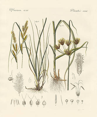 Cosmopolitan Drawing - Strange Grasses by Splendid Art Prints