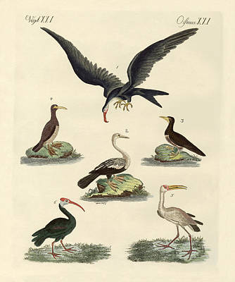 Stork Drawing - Strange Marsh-birds And Waterbirds by Splendid Art Prints