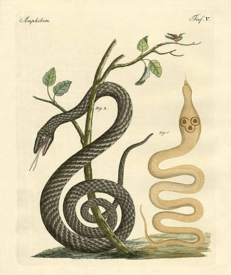 Cobra Drawing - Strange Snakes by Splendid Art Prints