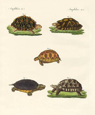 Strange Turtles Print by Splendid Art Prints