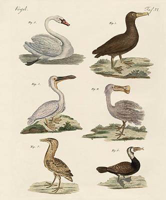 Albatross Drawing - Strange Water Birds by Splendid Art Prints
