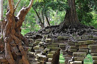 Strangler Fig Tree Roots On Preah Khan Temple Print by Sami Sarkis