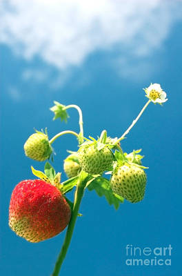 Red Photograph - Strawberries by Michal Bednarek
