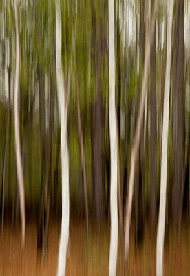 Woods Photograph - Streaky Trees At Mackenzie King Estate by Rob Huntley