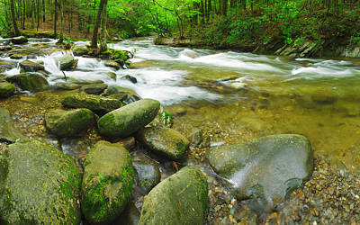 White River Scene Photograph - Stream Following Through A Forest by Panoramic Images