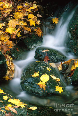 Bash Bish Falls Photograph - Stream In Autumn by George Ranalli