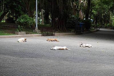 Street Dog - Phuket Thailand - 01131 Print by DC Photographer