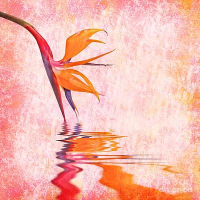Strelitzia Photograph - Strelitzia by Delphimages Photo Creations