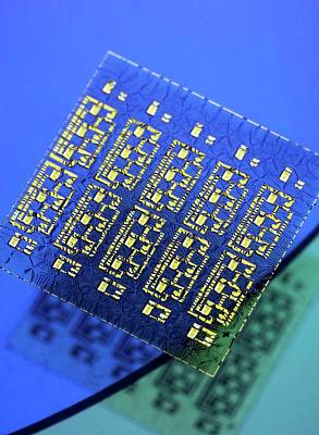Micro Miniature Photograph - Stretchable Electronic Circuit by Professor John Rogers, University Of Illinois