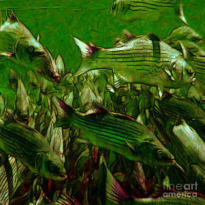 Striped Bass - Painterly V2 - Square Print by Wingsdomain Art and Photography