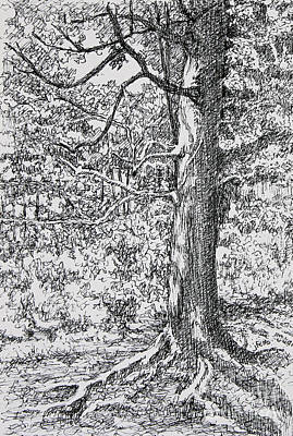 Drawing - Strong Roots by Janet Felts