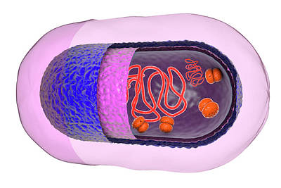 Structure Of Bacteria Cell Print by Kateryna Kon