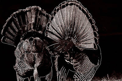Turkey Digital Art - Strutters by Todd Hostetter