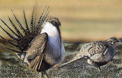 Grouse Painting - Strutting Grouse by Shannon Watts