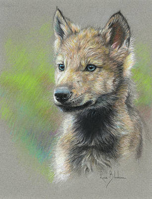 Gray Wolf Drawing - Study - Baby Wolf by Lucie Bilodeau