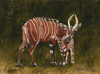 Endangered Wildlife Painting - Study Of A Mountain Bongo by Rob Dreyer AFC