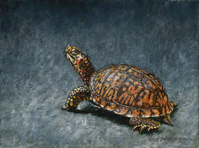 Turtle Painting - Study Of An Eastern Box Turtle by Rob Dreyer AFC
