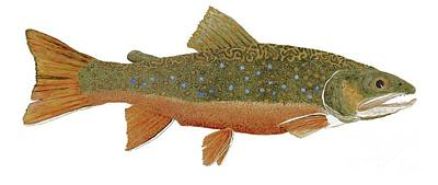 Study Of An Wild Eastern Brook Trout  Print by Thom Glace