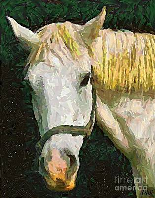 Study Of The Horse's Head Print by Dragica  Micki Fortuna