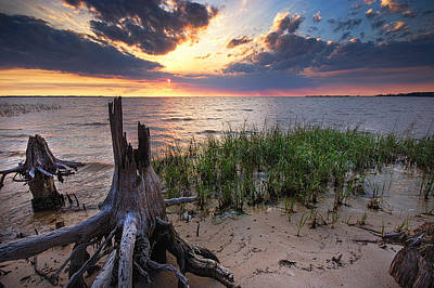 Sand Fences Digital Art - Stumps And Sunset On Oyster Bay by Michael Thomas