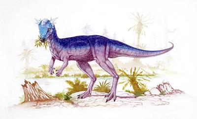 Dinosaur Photograph - Stygimoloch Dinosaur by Deagostini/uig
