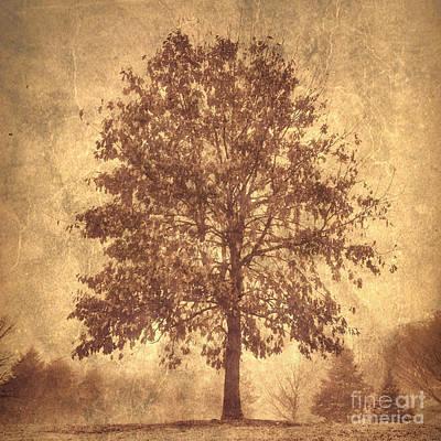 Suburban Tree Print by Chris Scroggins