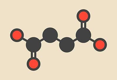 Stylized Beverage Photograph - Succinic Acid Molecule by Molekuul