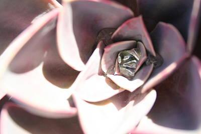 Photograph - Succulent Blush by Angela Hansen