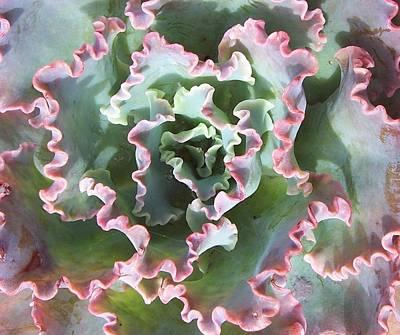 Photograph - Succulent Cabbage by Angela Hansen