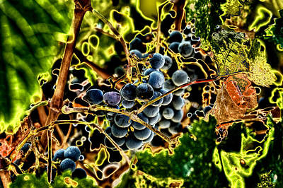 Purple Grapes Digital Art - Succulent Grapes by David Patterson