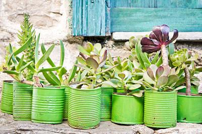 Succulent Plants Print by Tom Gowanlock