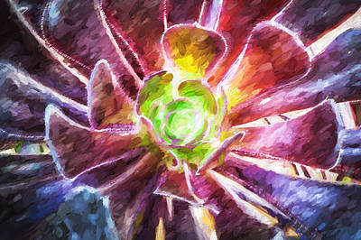 Succulent Purple Aeonium Leaves Painted Print by Rich Franco