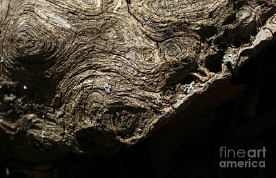 Burl Photograph - Suffer To The Edge by Adam Long