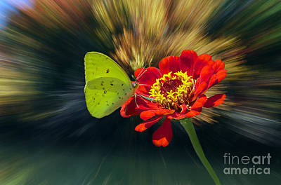 Flying Spider Photograph - Sulphur by Skip Willits